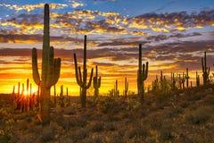 Sun. Set in Sonoran Desert, near Phoenix stock images