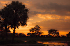 Sunset in South African Etosha park on the shore of the lake in Royalty Free Stock Photos