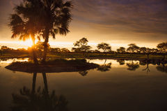 Sunset in South African Etosha park on the shore of the lake in Royalty Free Stock Photo