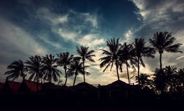 Sunset in the south. Royalty Free Stock Photos