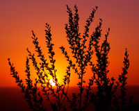 Sunset in Southwest. Silhouette of desert plant against New Mexico sunset royalty free stock image