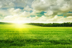 Sunset on spring field Royalty Free Stock Photo