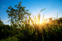 Sunset in spring forest Royalty Free Stock Images