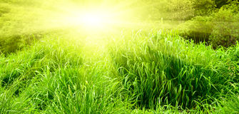 Sunset and spring grass Royalty Free Stock Images
