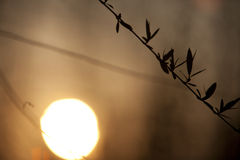 Sunset in spring with willow leaf Royalty Free Stock Image