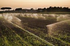 Sunset sprinklers royalty free stock image