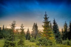 Sunset in spruce forest Royalty Free Stock Images