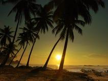 Sunset on Sri Lanka royalty free stock image