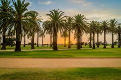 Sunset at St Kilda beach with palm trees in the foreground Stock Photos