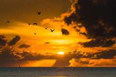 Sunset in st. Petersburg. Birds fly at sunset in st. Petersburg in USA Royalty Free Stock Photography