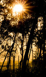 Sunset Starburst in Forest Royalty Free Stock Photography