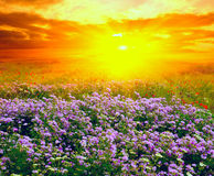 Sunset in steppe Royalty Free Stock Photo