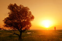 Sunset in the steppe Royalty Free Stock Photo