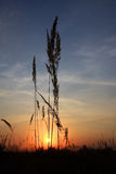 Sunset in steppe Stock Photos