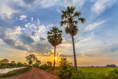 Sunset on sugar palm tree along the dirt road Stock Photo