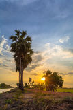 Sunset on sugar palm tree along the dirt road Stock Photography