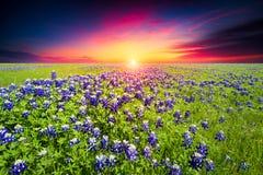Sunset on Sugar Ridge Road, Ennis, TX Stock Image