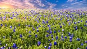 Sunset on Sugar Ridge Road, Ennis, TX Royalty Free Stock Photo