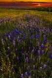 Sunset on Sugar Ridge Road Royalty Free Stock Image