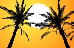 Sunset summer Royalty Free Stock Photo