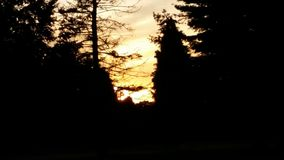 Sunset in the summer. Eery sunset in a forest Stock Photo