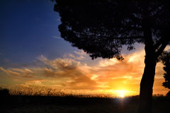Sunset, summer evening. Blue sky cloud sun tree Stock Photo