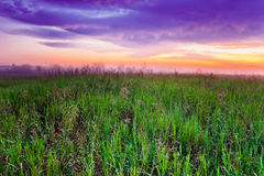 Sunset in summer field Royalty Free Stock Photo
