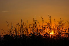 Sunset. In a summer field Stock Photography