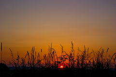 Sunset. In a summer field Stock Image