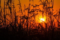Sunset. In a summer field Stock Photo