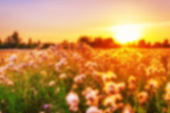 Sunset in summer field in defocus Royalty Free Stock Photos