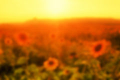 Sunset in summer field in defocus. Nature background Stock Photography