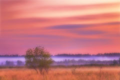 Sunset in summer field in defocus. Nature background Stock Photos