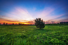 Sunset in summer field. Landscape with coloful sunset in summer field Royalty Free Stock Photos