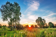 Sunset in summer field. Landscape with coloful sunset in summer field Stock Photo