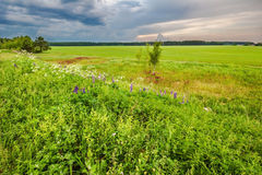 Sunset in summer field. Landscape with coloful sunset in summer field Royalty Free Stock Photography