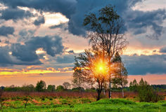 Sunset in summer field. Landscape with coloful sunset in summer field Royalty Free Stock Images