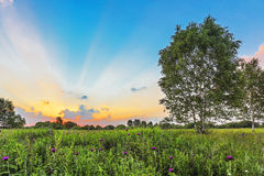 Sunset in summer field Royalty Free Stock Photography