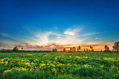 Sunset in summer field Royalty Free Stock Images