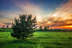 Sunset in summer field Royalty Free Stock Photos