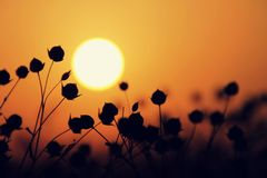 Sunset. In summer on the flax field royalty free stock photos