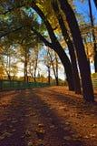 Sunset in Summer garden. Autumn in St.-Petersburg Stock Photography