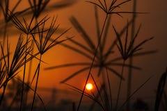 Sunset through summer grass. The sun setting seen through stalks of summer grass Stock Photography