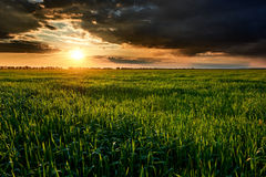 Sunset, summer landscape, bright colorful sky and clouds as background, green field and trees Royalty Free Stock Image