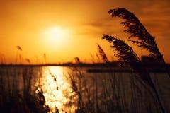 Sunset summer landscape Royalty Free Stock Photo