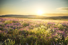 Sunset on summer mountain meadow. Stock Image