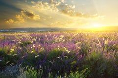 Sunset on summer mountain meadow Stock Photos