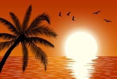 Sunset. Summer Sunset Landscape. Stock Image
