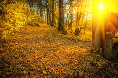 Sunset with sun  in autumn forest instagram stile Stock Image