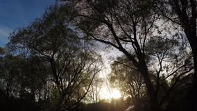 Sunset sun in the branches of trees stock footage